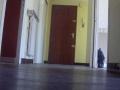 appartement-pour-location-t4-96-m2-bellegarde-sur-valserine-couloir-entree